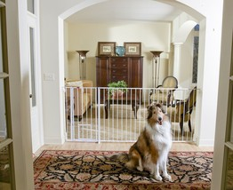 Carlson Extra Tall Maxi Walk-Thru Gate with Pet Door 1210HPW for dog - $130.89