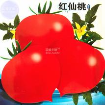 BEST PRICE 300 Seeds Red Flat Peach Tomato,DIY Vegetable Seeds E4473U DG - $5.89