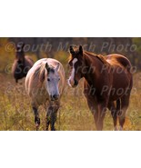 Stock photos 6 pictures horses wallpaper desktop background zip file screen pics - $7.50