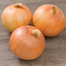Expression Onion Seed , Vegetable Seeds,Ship From US - $17.00