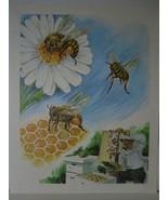 Beekeeping Art Print - Bees, Hive, Honeycomb - Vintage David C Cook Litho - $10.80