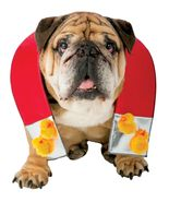 Chick Magnet Pet   Dog Costume , MEDIUM / LARGE - Free Shipping - $25.00