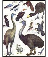 Extinct Birds Ornithology Art Print  Collectible Vintage 1982 Home Decor - $10.99