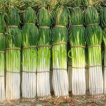 Shangdong Zhangqiu Giant Chinese Green Onion Seeds Vegetable Seeds Home ... - $8.99
