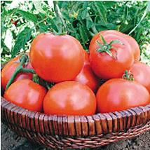 Willamette Tomato Seeds (((100 Seed Packet))) (More Heirloom, Organic, Non GMO,  - $7.83