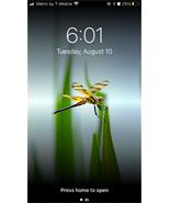 Listing dragonfly coolpreset virgin final file 002 thumbtall