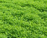Garden Cover Crop Mix Seeds Blends - 25 LB  - €123,25 EUR