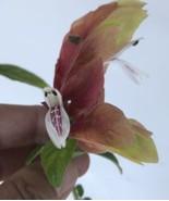 Live Plants-Justicia brandegeana Red Shrimp Plant - $6.60