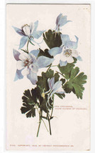 The Columbine Colorado State Flower 1905c postcard - $6.44