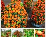 19a thumb155 crop