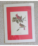 Vintage wildlife/ animal poster print,  professionally printed  from an original - £10.90 GBP