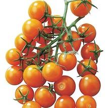 20 Seeds of Sunsugar Hybrid Tomato - $17.81
