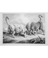 1801 ORIGINAL ETCHING Print by Howitt - Bulls Fighting - $30.60