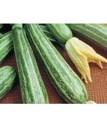 25 Cocozelle Zucchini Squash 2019 ( Non-Gmo Free Shipping! ) - $5.12