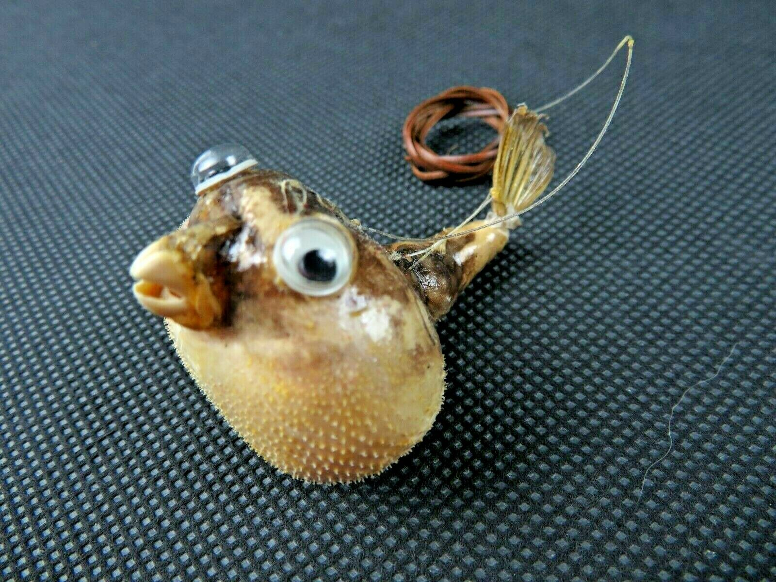 Primary image for Vintage small funny Globe Fish Taxidermy Animal Natural deco