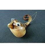 Vintage small funny Globe Fish Taxidermy Animal Natural deco - $48.00