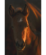 Little Miss by Robert Dawson Canvas Giclee Portrait of a Horse Open Edition - $246.51