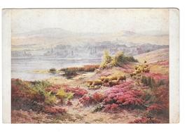 Painting Edouard Pail The Pond Landscape Salon de Paris JPP Nr 2019 Postcard - $4.99