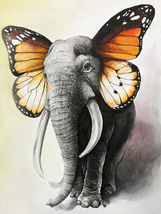 DIY Frame Included Paint By Numbers,  Elephant with Butterfly ears, Canva  - $17.50