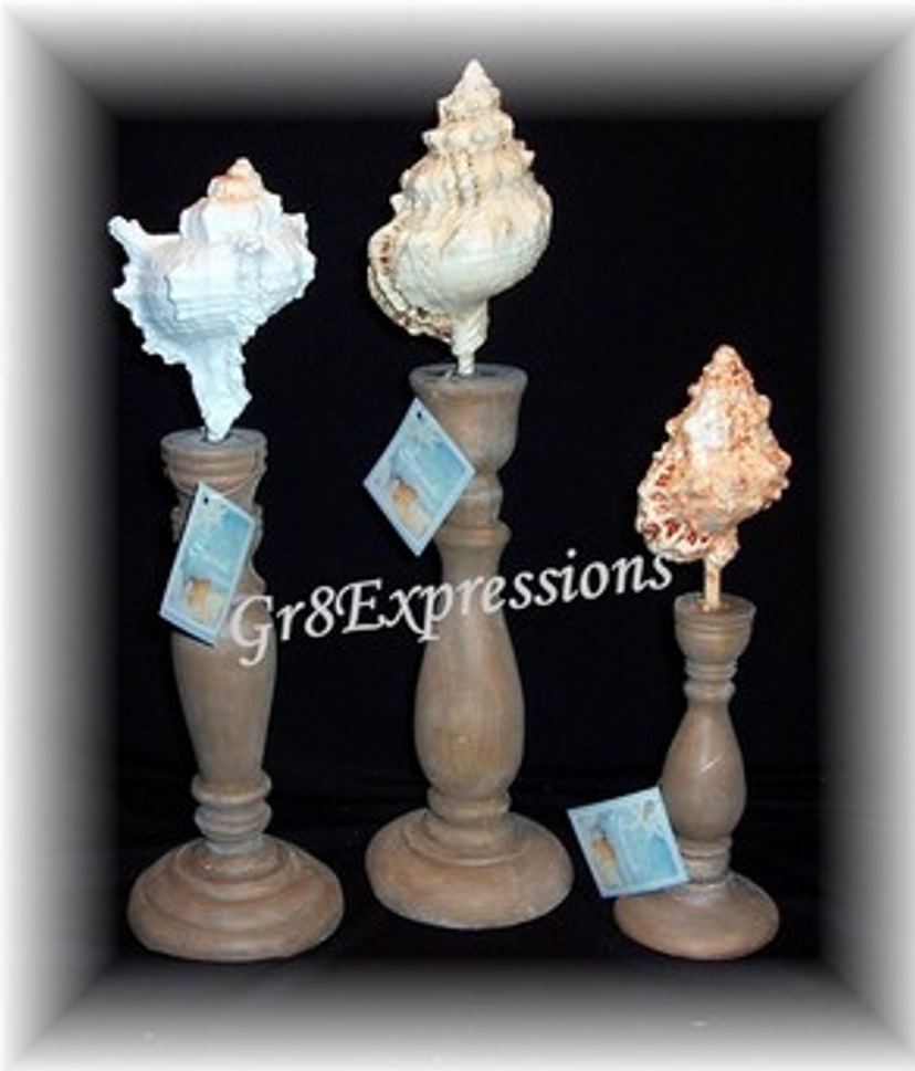 3 sea shell finials b