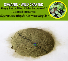 POWDER Shaggy Button Weed Jointed Buttonweed Spermacoce Hispida Borreria... - $7.85+