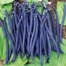 15 Black Beans Seed Phaseolus vulgaris Garden Planting Vegetable Seeds - $13.58