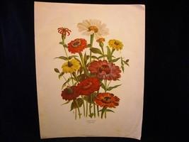 Vintage Floral Print Loudon Florals 1783-1834 no 1085