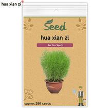 200 Pcs Kochia seeds, HZ Decorative Flower Plant - $7.13