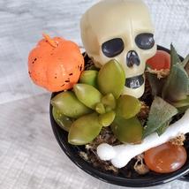 Halloween Planter with Live Succulents, Mug Garden, Skull Halloween fairy garden image 7