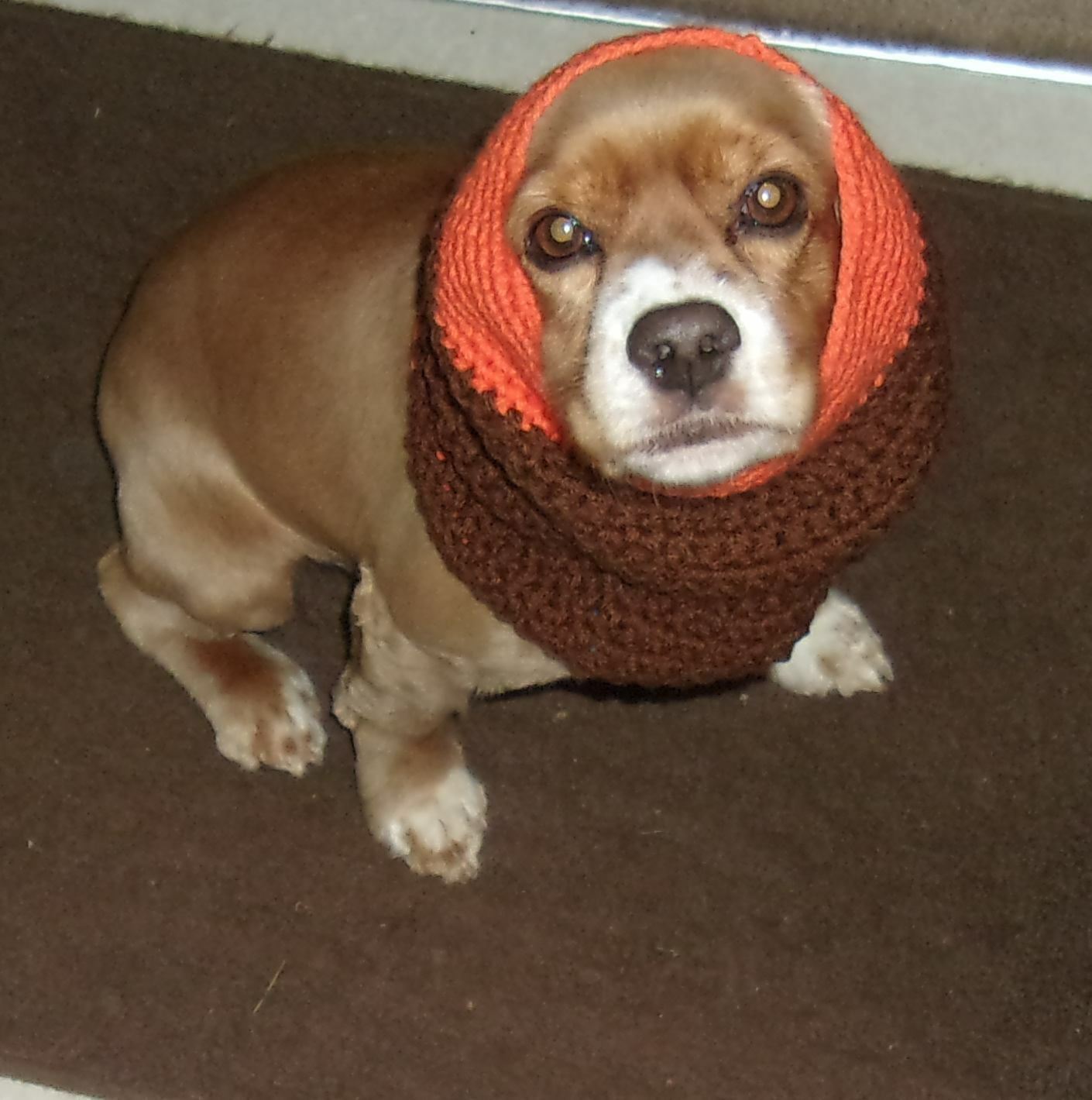 Brand New Hand Crocheted Brown Orange Dog Snood Neck Warmer 4 Dog Rescue Charity