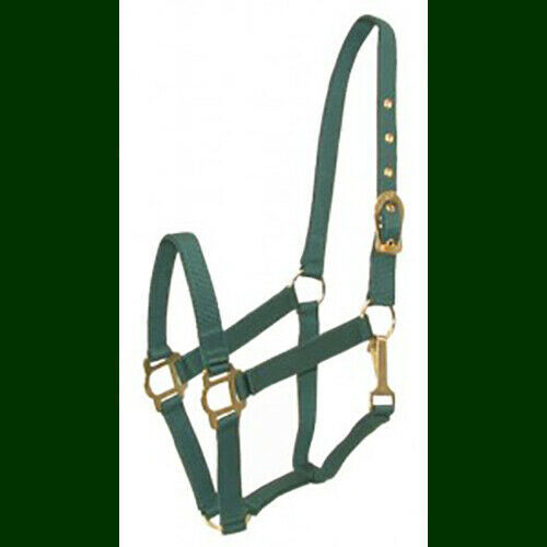 COB Arab Nylon Halter Classic NEW!  Hunter