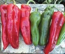 Godfather F1 Hybrid Sweet Pepper Seeds vegetable seeds 25 seeds - $11.65