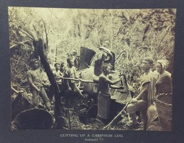 Antique Old PHILADELPHIA MUSEUMS Photo -CUTTING UP A CAMPHOR LOG Teachin... - $48.95