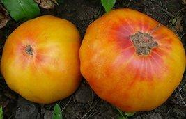 1/4 Oz Seeds of Pineapple Tomato - $38.61