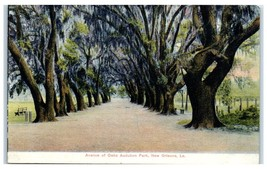 Early 1900s Avenue of Oaks, Audubon Park, New Orleans, LA Postcard  - $9.28