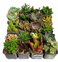 Fat Plants San Diego Succulent Plants 20 - $48.84