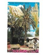 Coachella CA King Solomon Tree Male Female Blossoms Vintage Postcard - $4.99