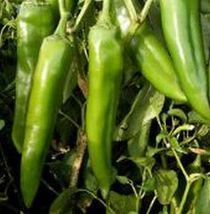 SHIP From US, 25 Seeds NuMex Pueblo Hot Pepper Seeds, DIY Healthy Vegeta... - $24.99