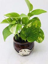 Golden Devil's Ivy 'Pothos' in Native Elephant Ceramic Pot / Very Easy to Grow - $25.47