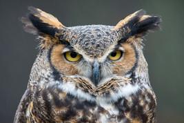 Owl Animal Spirit Companion Guardian Protector Vigilante Spell Conjuration - $50.00
