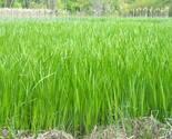 2011 widlife walks 001 thumb155 crop
