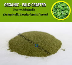 POWDER Greater Selaginella Selaginella Doederleinii Hieron Organic Wild ... - $7.85+