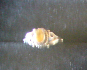 Citrine Sterling Silver Ring SZ 5