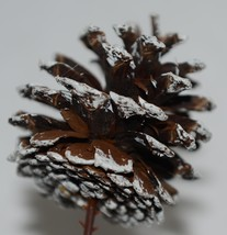 Wholesale lot 15 Pine Cones Fake Snow White Tipped Plastic End Pics image 2