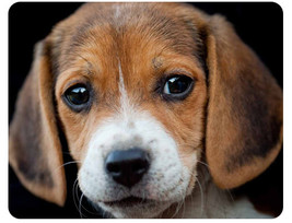 Beagle Puppy Cute Dog Mouse pad New Inspirated Mouse Mats Ac8 - $6.99