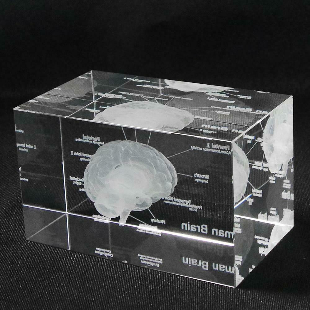 Primary image for 3D Human Anatomical Model Paperweight Laser Etched Brain Crystal Glass Cube