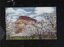 PEACH ORCHARD IN BLOOM MT. GARFIELD COLORADO ELMER CLARK E.C. KROPP POST... - $8.42