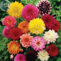 Best Price 50 Seeds Mixed Dahlia Bonsai Flower,Diy Flower Seeds BD161H Dg - $4.49