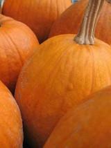 15 Sugar Pie Pumpkin Seeds-1072A - $3.98