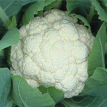 1/2 Oz Seeds of Cloud Cauliflower - $45.44